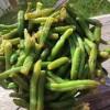 aspargesbønnesalat med rødløk